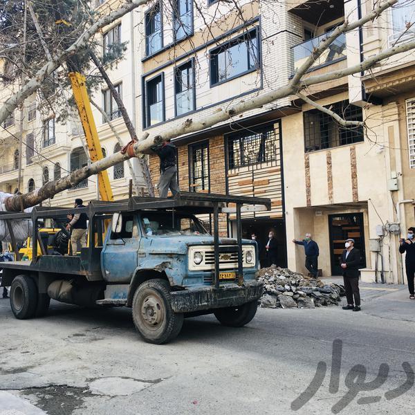 جابجایی درخت تخصص ماست|باغبانی و درختکاری|تهران، تجریش|دیوار