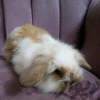 درخواست خرگوش|موش و خرگوش|تهران_استخر|دیوار