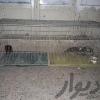 قفس جوجه پرون لوازم جانبی اصفهان_آتشگاه دیوار
