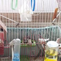 قناری +فنچ+قفس +جوجه پرون|پرنده|تهران_حکیمیه|دیوار