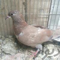 سیمونی کناری تر|پرنده|اصفهان_شیخ بهایی|دیوار